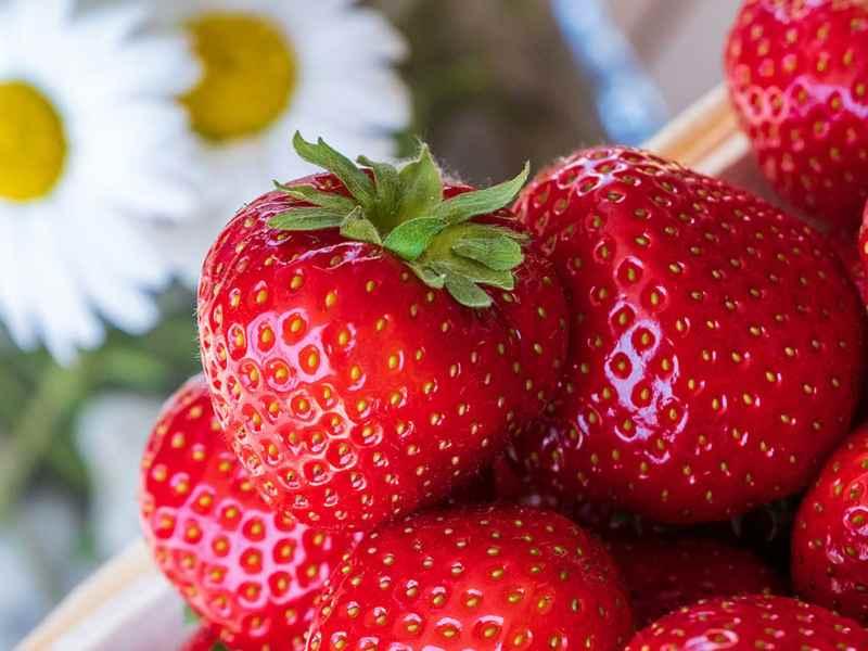 SPIESS Modehaus Eppingen - Erdbeerfest am 5. und 6. Juli 2019